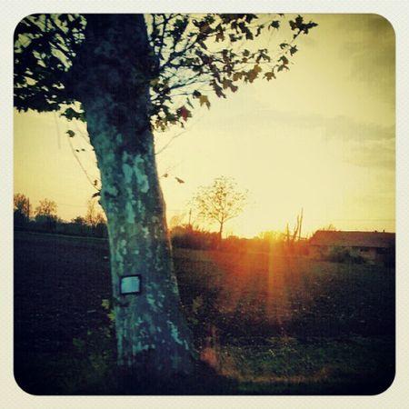 Sun Sunset Scatti_italiani Sunshine sky trees instaitaly instagram italiangeography igersoftheday igdayly instamood igweekleypics instaprints instacanvas igersreggioemilia igersitalia instaitalia beitalian picoftheday photooftheday