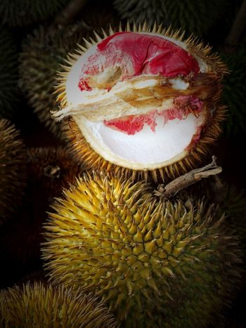 Red durians are not so common and are a wild species. Durian Durio Graveolens Exotic Fresh Produce Kota Kinabalu Market South East Asia Unusual Day Delicious Durian Sukang Favourite Food Fruit King Of Fruit Malaysia No People Red Durian Red Flesh Sabah Borneo Sought After Uncommon  Wild Durian EyeEmNewHere An Eye For Travel