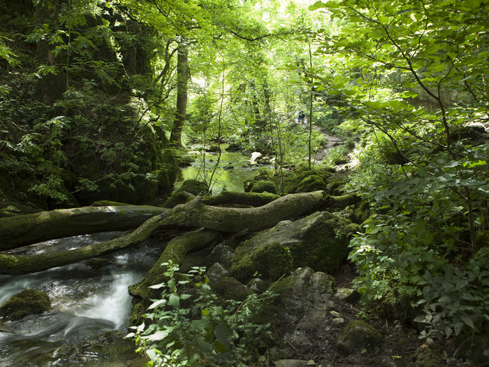Janet's Foss Skipton West Riding Yorkshire Beauty In Nature Branch Day Forest Green Color Growth Lush Foliage Nature No People Outdoors Plant River Rock - Object Scenics Tranquil Scene Tranquility Tree Water Waterfall