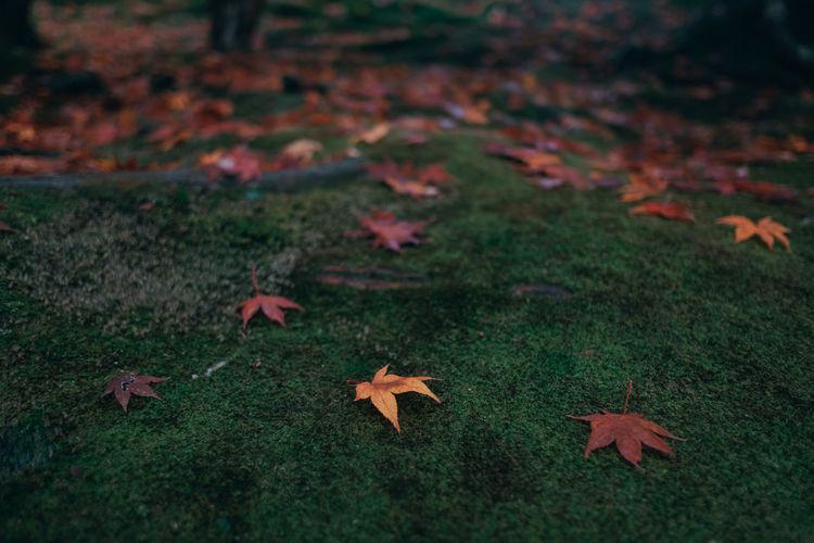 Autumn Leaves Fallen On Ground