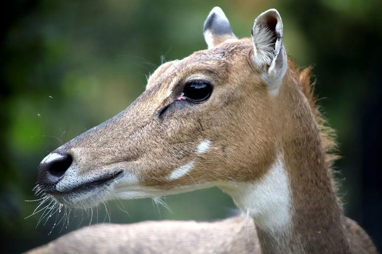 Close-up of deer