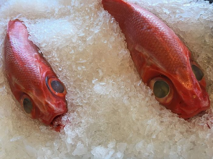 Close-up of red fishes amidst crushed ice at market