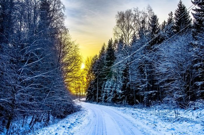 """And it all began with a single snowflake."" Snowy Forest Forest Road Snowfall Snowy Road Winter Pine Forest Forest Snow Road Pine Trees Winding Road Country Road Countryside Rural Winter Season Sunset Sunrise Evening Light Winter Wonderland Winter Trees Estonia Cables And Wires Dusk Sky"