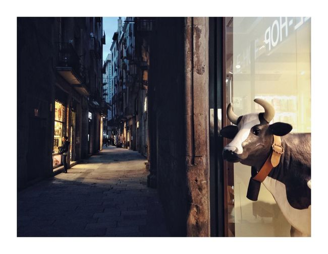 Guets-apens Barcelona Cow No People Domestic Animals Built Structure Day Building Exterior Outdoors Animal Themes Mammal Architecture