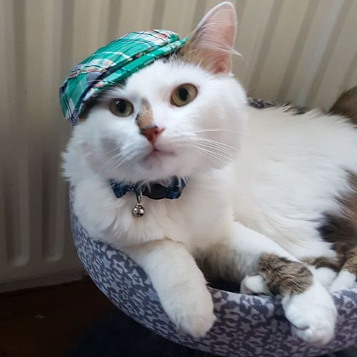 Mycat Catinahat Funny Alfie Cutie Pet