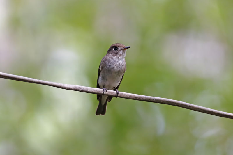 Bird Vertebrate Animal Animal Themes Animal Wildlife One Animal Animals In The Wild Perching Focus On Foreground No People Day Close-up Plant Nature Outdoors Full Length Green Color Selective Focus Songbird  Metal
