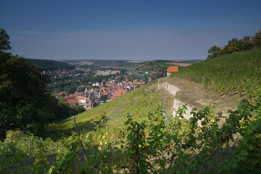 Freyburg Burgenlandkreis Saaleunstrut Weinberg Schlifterweinberg Sachsen-Anhalt Saxony Anhalt Landschaft
