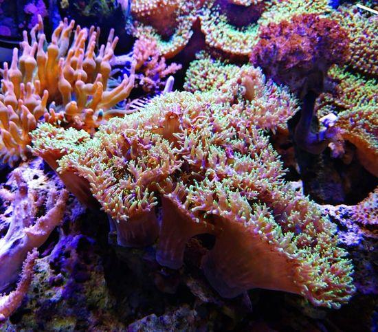 unter Wasser ... under water Underwater Sea Life Coral Wilderness Scuba Diving Close-up Multi Colored Unter Wasser Unterwasserwelt Beliebte Fotos EyeEmNewHere EyeEm Selects Eyeem Under Water Multicolored Multi Coloured Taking Photos Taking Pictures Under Water World Under Water Photography