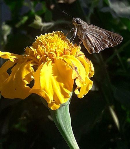 mont on flower