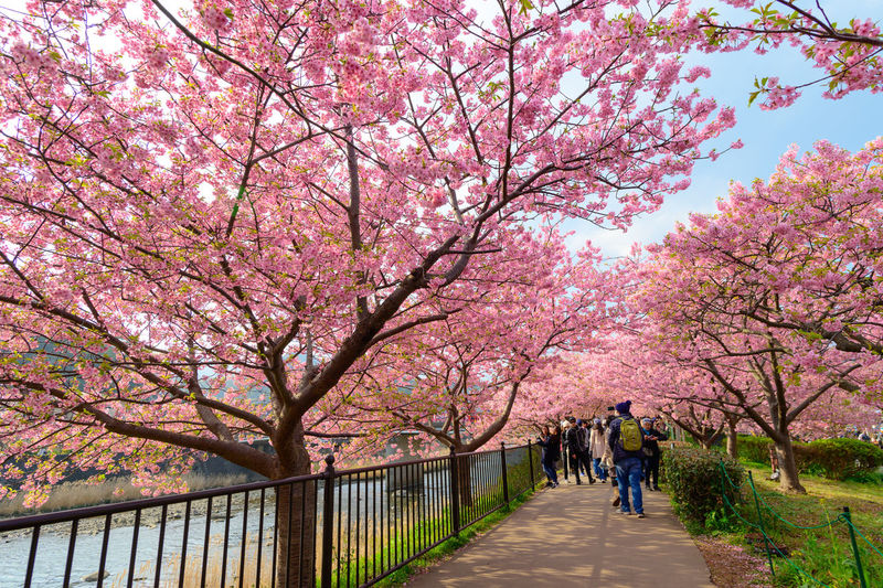Cherry blossoms in park during autumn