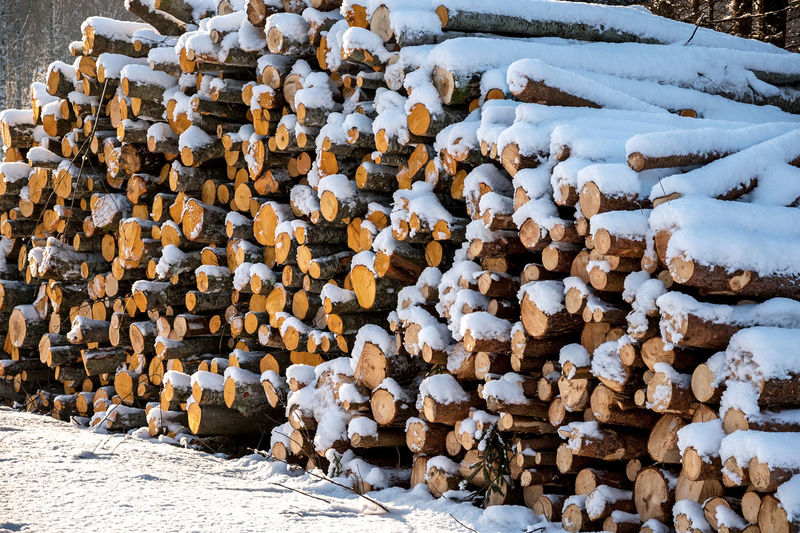 Stack of logs on snow covered land