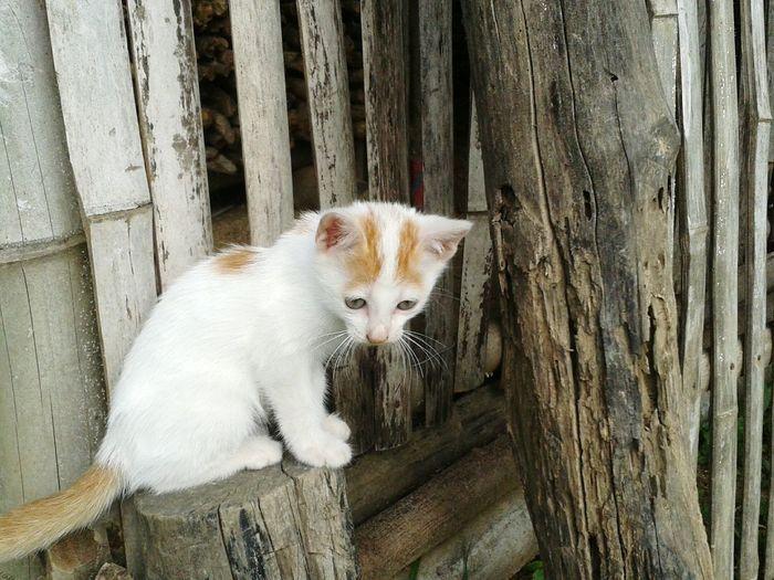 Cat Cats Kitten Kittens Fur Furry Pet Pets Feline