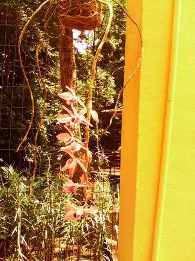 @pure Nature Collection Flowers,Plants & Garden