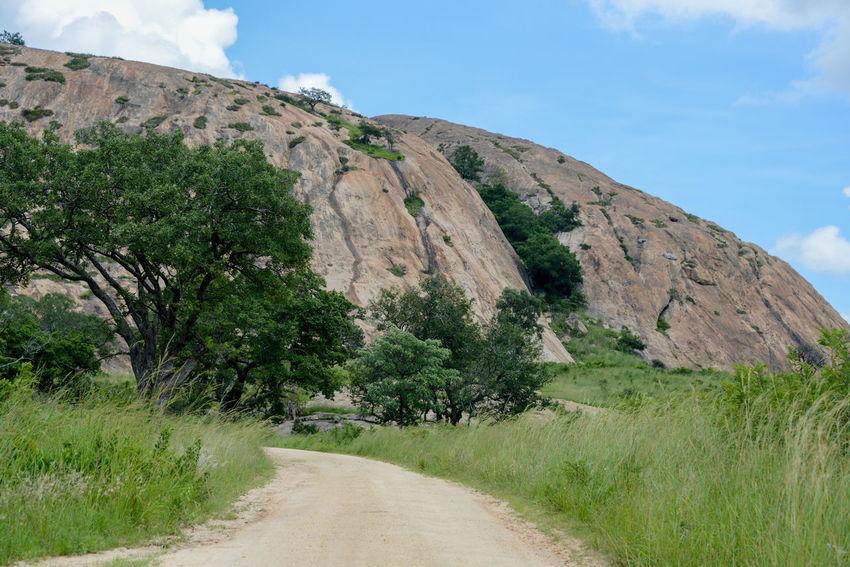 Safari in Kruger National Park, South Africa Kruger Park South Africa Wildlife & Nature Africa Beauty In Nature Day Kruger Krugernationalpark Krugerpark Landscape Nature Outdoors Safari Safari Park Scenics Tree