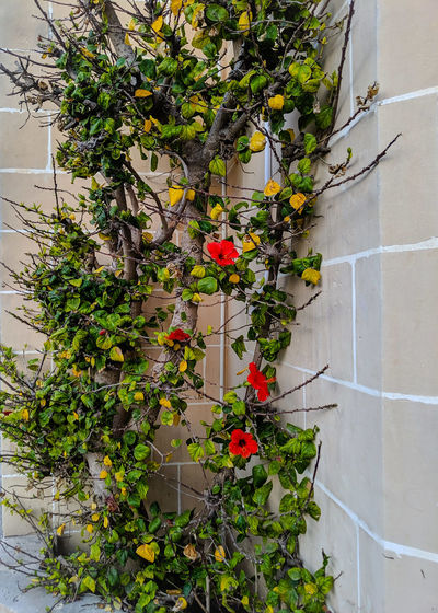 Flowering plants against wall and building