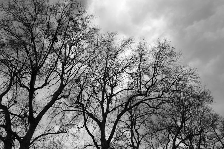 Eye4photography  EyeEm Best Shots EyeEm EyeEm Best Pics Close-up Bnw Blackandwhite Black And White Black & White Blackandwhite Photography Monochrome Tree Low Angle View Sky Bare Tree Cloud - Sky Branch Nature Beauty In Nature Outdoors Silhouette Tree Canopy  Scenics - Nature Tranquility
