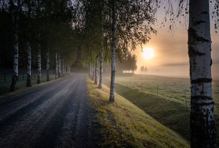 Idyllic sunrise landscape with road and fog at beautiful autumn morning in Finland Tree Plant Sunset Sky Beauty In Nature Sun Tranquility Scenics - Nature Tranquil Scene No People Tree Trunk Growth Landscape Outdoors Environment Road Birch Meadow Misty Morning Field Tranquility Idyllic Finland Fog Sunrise Autumn Mood