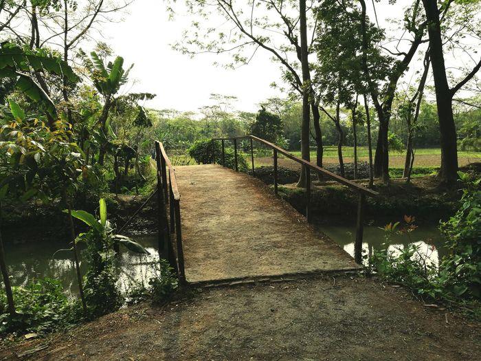 Beautiful Bangladesh Tree Outdoors Nature