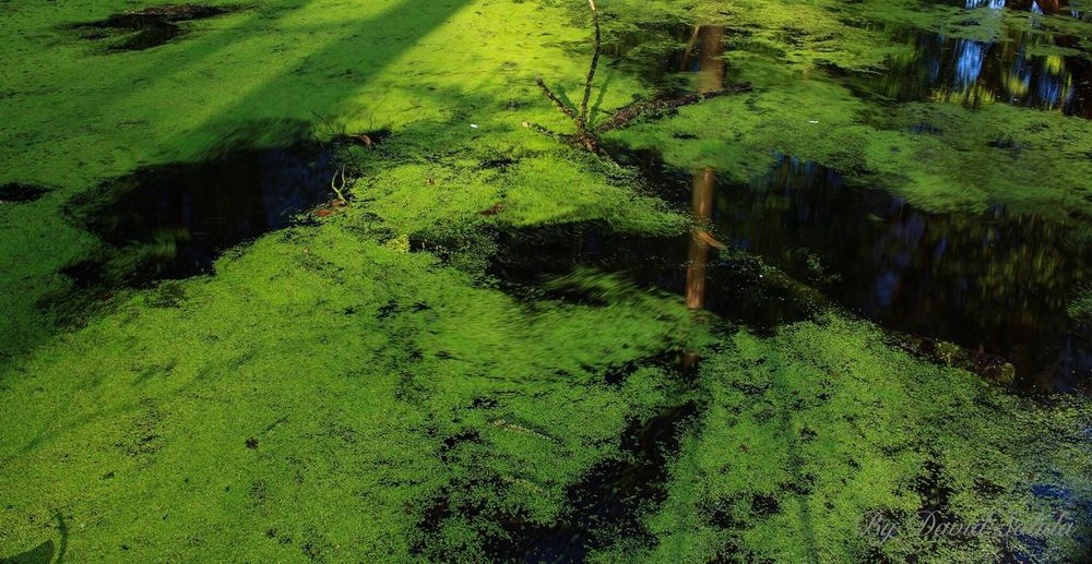Good Morning Green Color Nature No People Water Beauty In Nature Forest Photography Canonphotography Basel, Switzerland