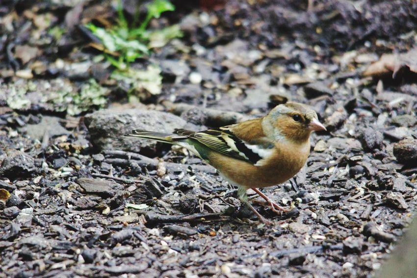 Bird Perching Animal Themes Close-up