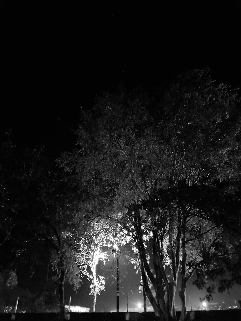 tree, night, illuminated, growth, branch, low angle view, nature, outdoors, no people, silhouette, tree trunk, beauty in nature, sky