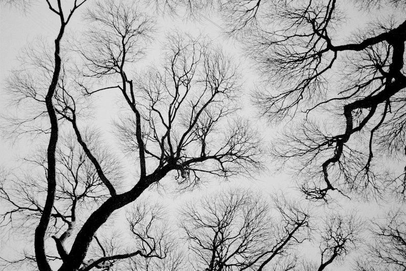 Nature Sky Tree Silhouette Day Outdoors Tranquility Plant Land Tree Trunk Branch Bare Tree Tree Canopy  Beauty In Nature Trunk No People Backgrounds Tranquil Scene Low Angle View Scenics - Nature Analogue Sound
