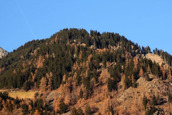 100 Mm Autumn Colors Blue Sky December 2015 Landscape Mountain Nature No Snow  Rabland,sudtirol Scenics Trees Wintertime