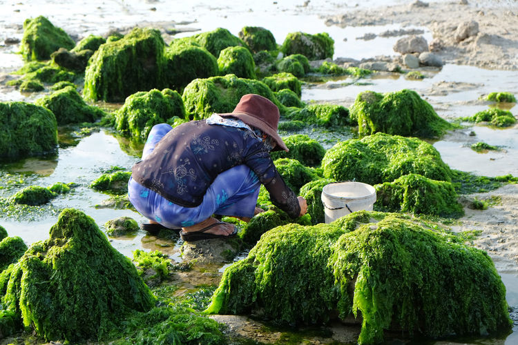 Rear view of senior woman working on mossy rocks at beach