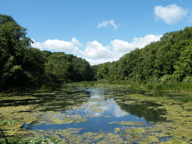 Beauty In Nature Cloud - Sky Day Green Color Growth Lilies Lily Pools Nature No People Outdoors Pembrokeshire Pembrokeshire Coast Pembrokeshire Coastal Path Reflection Scenics Sky Stackpole Tranquil Scene Tranquility Tree Water