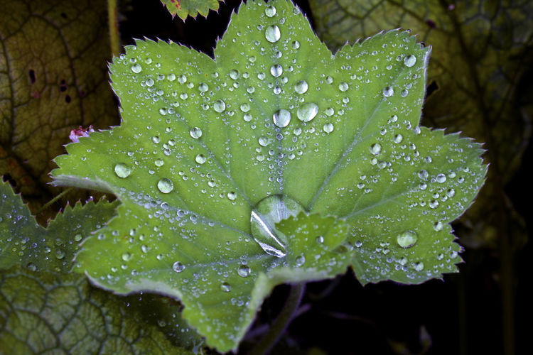 High Angle View Of Raindrops On Green Leaves