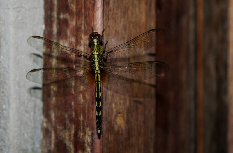 Dragonfly Insect Animals In The Wild Animal Themes Spider Web Animal Wildlife No People Day Outdoors Close-up Nature