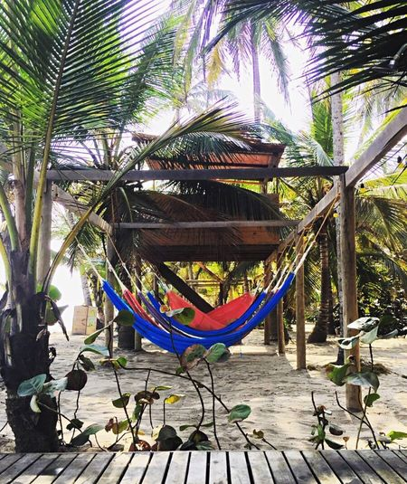 Paradise Colors Relaxing Beach Palmeras Tree Multi Colored Day Plant Architecture Nature Outdoors No People Hammock Sunlight