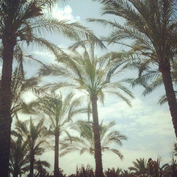 Palm Tree Palm Trees Palm Tree Silhouette Palm Tree Leaves Group Vintage