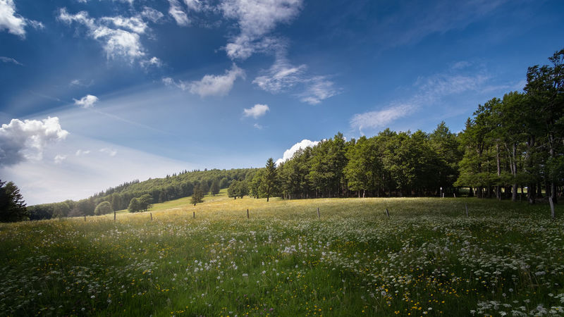 Eine Frühlingswiese auf dem Kandel Beauty In Nature Cloud - Sky Day Environment Field Grass Green Color Growth Land Landscape Nature No People Non-urban Scene Outdoors Plant Scenics - Nature Sky Sunlight Tranquil Scene Tranquility Tree