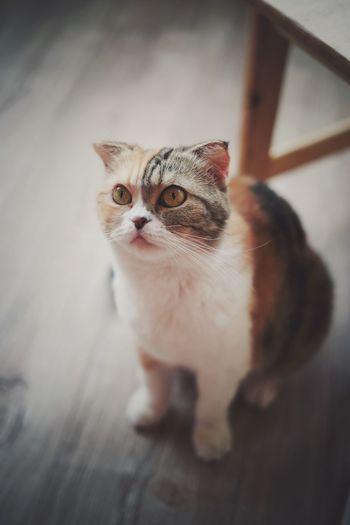 Watch cat Pets
