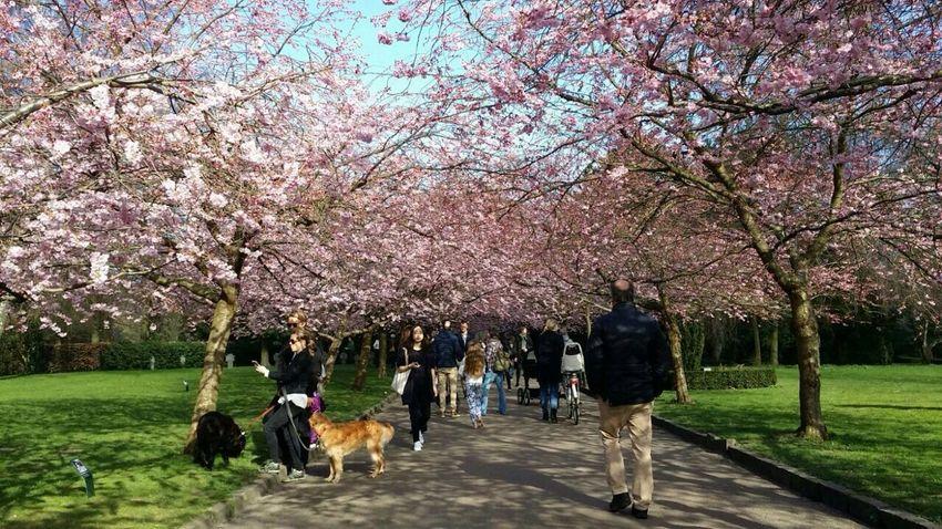Bom Dia ❤ Hallo Welt Hallo World Guten Morgen Good Morning Flower Trees Tree Parque Alemanha Park