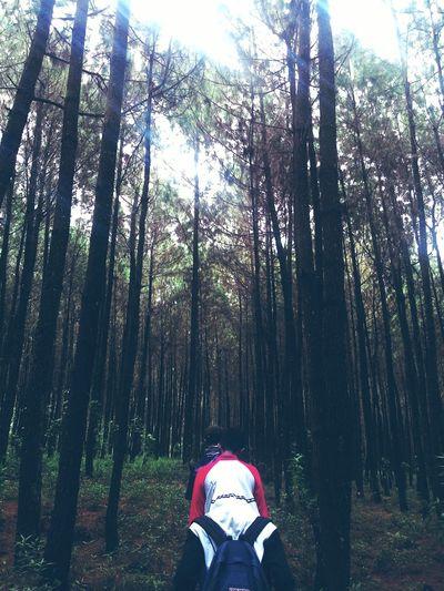 Tree Mountain People Walking Hiking
