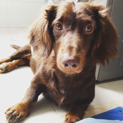 Dog Pets Dog Love Dog❤ Doggie Dog Lover Cute Pets I Love My Dog Animal Head  Doglover Dogs Of EyeEm Check This Out Dachshund Sausagedog Dachshundlove