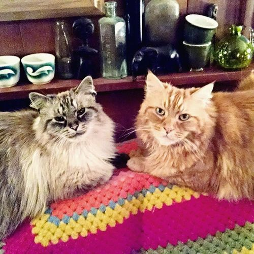 Home sweet home. 🏡 Kittensgalore FamilyTime Gypsyclan Quincyandtango brothers upstate holidays