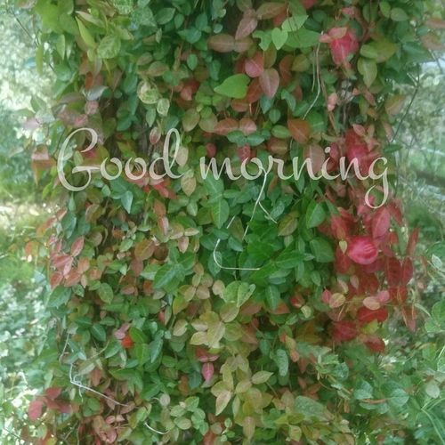 少しずつ秋🍁 Leaf Green Color Growth Plant Text Day Ivy Nature Outdoors No People Tree Close-up Fragility Beauty In Nature Freshness