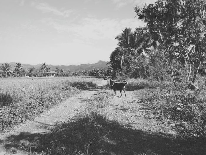 Dog Animals Black And White Landscape Nature Nocolor Road Animal Themes Animal Dog Domestic Animals Mammal Nature Day
