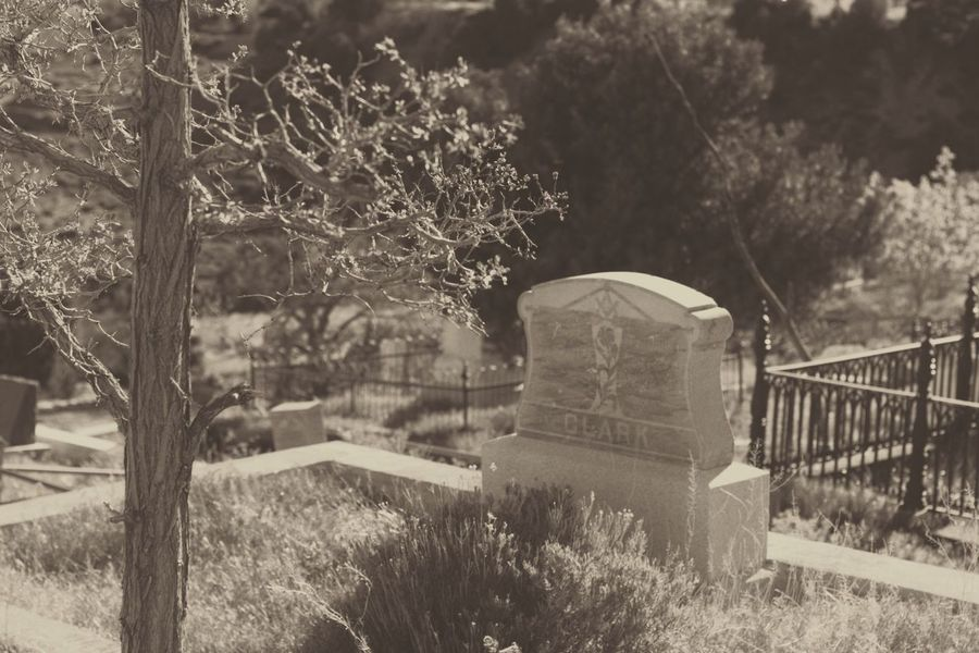 Dark🌌 By Tisa Clark Tree Plant No People Nature Outdoors Day Cemetery Growth Grass Graveyard Beauty In Nature Mammal Cemetery Shadows & Lights Dark Photography Blackandwhite Shadow Darkness And Light Gravestone Black & White By Tisa Clark