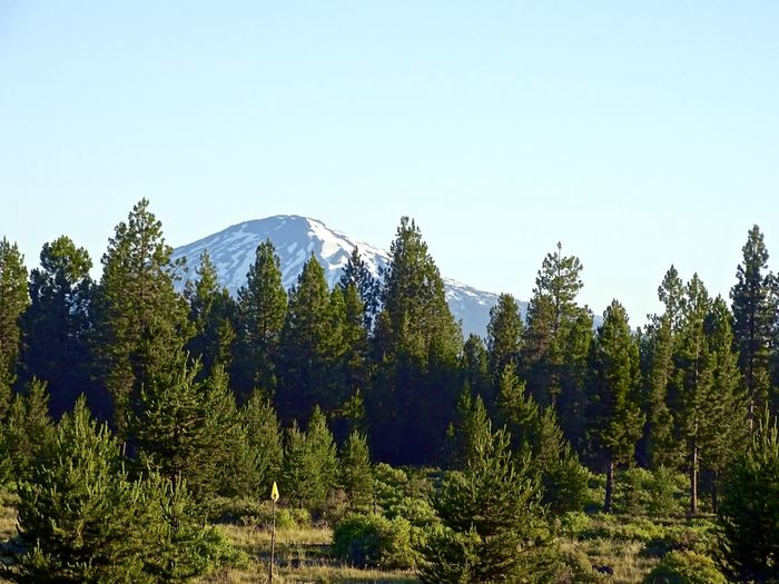 Beauty In Nature Clear Sky Day Forest Green Color Growth Landscape Mountain Mountain Range Nature No People Outdoors Pine Tree Scenics Sky Tranquil Scene Tranquility Tree