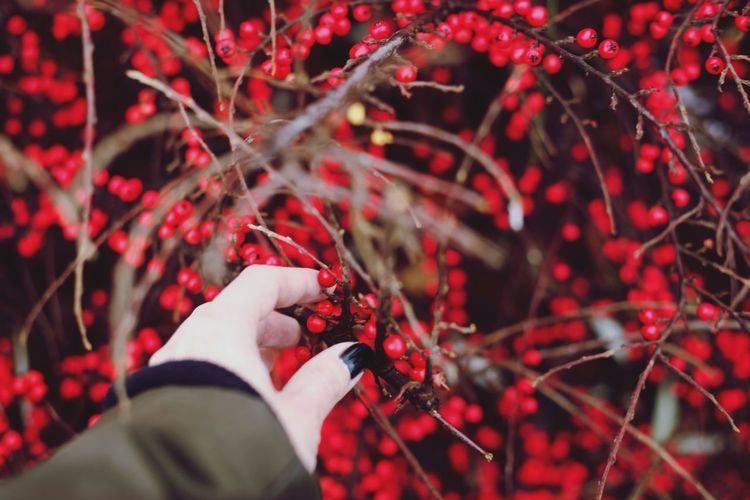 Human Hand Tree Fruit Red Autumn Branch Agriculture Winter Protective Glove Holding First Eyeem Photo