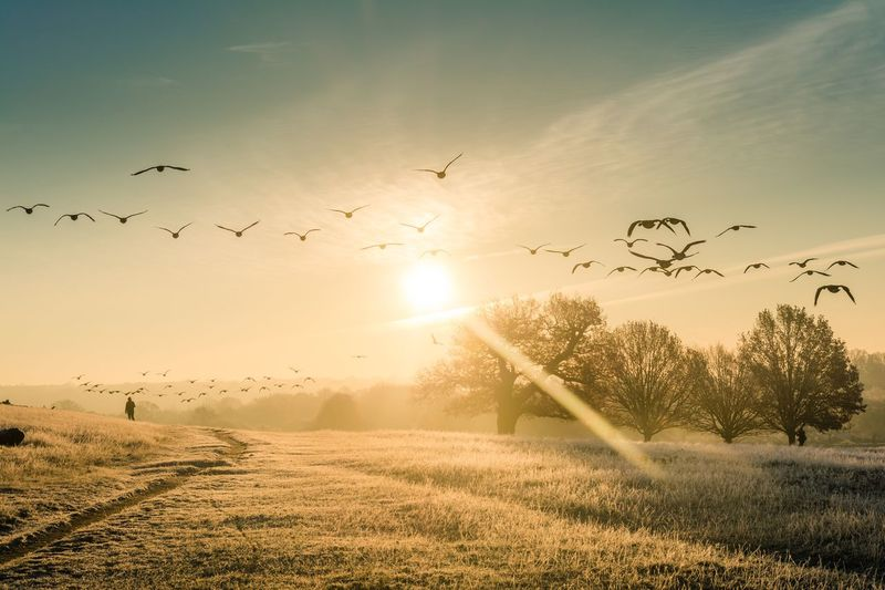 Birds Flying Over Field Against Sky During Sunset