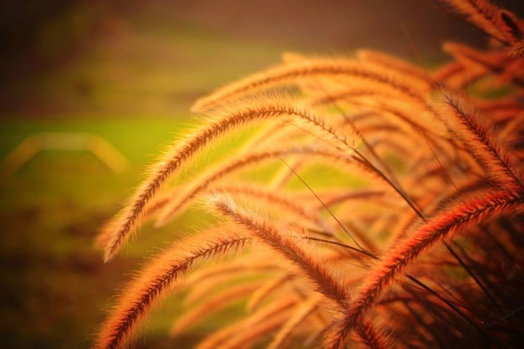 Close-up of fresh green plant during sunset