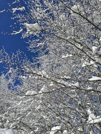 Snow Tree Backgrounds Full Frame Abstract Pattern Textured  Close-up No People Day Outdoors Ink