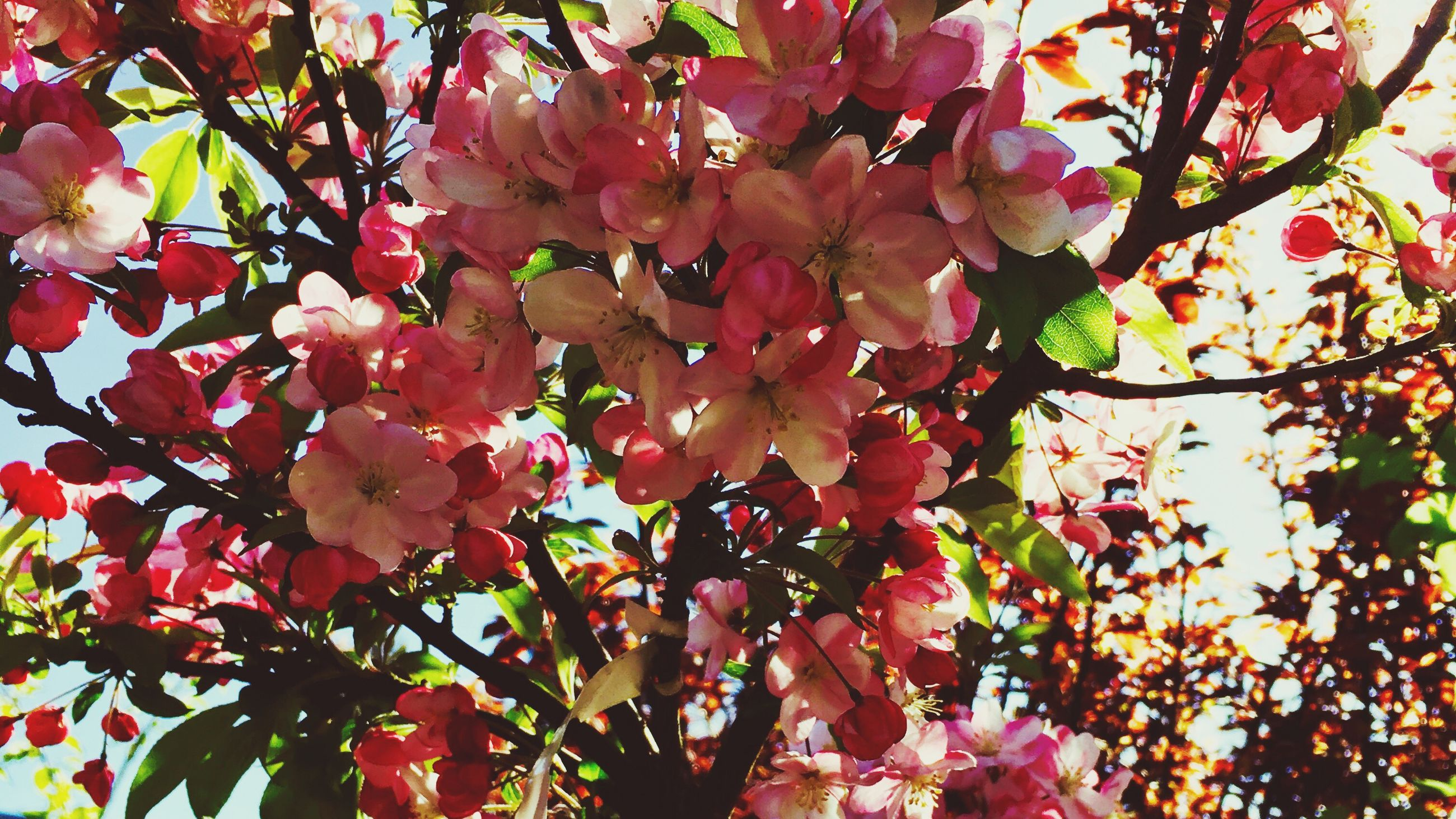 branch, tree, low angle view, growth, flower, freshness, beauty in nature, nature, pink color, leaf, fragility, blossom, day, outdoors, backgrounds, no people, twig, full frame, springtime, close-up