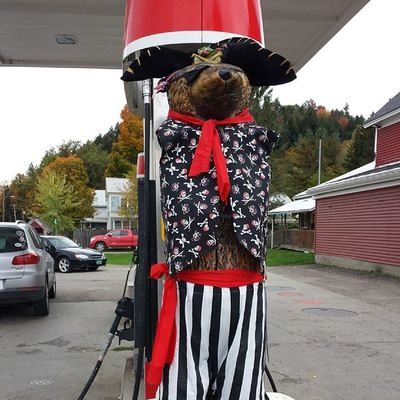 Cambridge Village Market Bear all decked out and ready for Halloween. ARRRRGHH! Cambridgevt Vt Vtphoto Vermont vermontbyvermonters greenmountainstate instagood photooftheday igvermont ignewengland