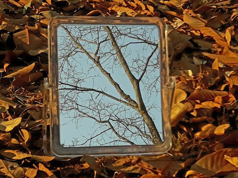 Autumn Branch Change Close-up Day Dried Plant Dry Field Fragility Frame Leaf Leafless Tree In Mirror Reflection Over Fallen Dry Leaves As Background Maple Nature No People Outdoors Plant Tree